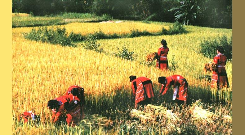 Pa Watu - Holylandvietnamstudies.com